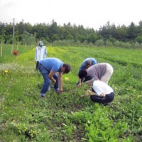 agricoltura-lavoro-campi