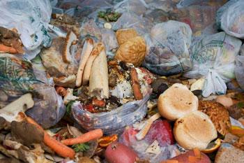 Buste piene di alimenti non consumati buttate tra i rifiuti