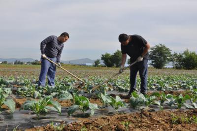 Persone che lavorano la terra in un campo coltivato a verdure